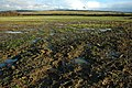 Waterlogged land near Elmstone Hardwicke - geograph.org.uk - 1611440.jpg