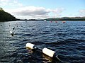 Watersports at Loch Insh - geograph.org.uk - 1528961.jpg