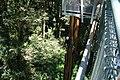 West Coast Treetop Walk- panoramio (3).jpg
