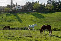 Westwind Community Barn Los Altos Hills.jpg