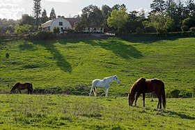 Westwind Community Barn Los Altos Hills.jpg
