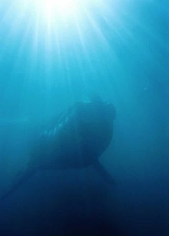 Valdes Peninsula - Image: Whale underwater panoramio