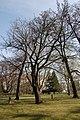 Wiener Naturdenkmal 829 - Speierling (Döbling) b.JPG