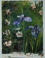 Wild Roses and Irises MET APS2378.jpg