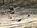 Wildlife - panoramio (4).jpg
