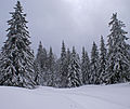 Winter forest (3215481956).jpg