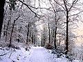 Winter im Teutoburger Wald22.jpg