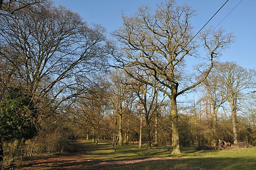 Wood in Welcombe Hill Country Park - geograph.org.uk - 2307980