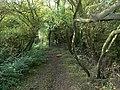 Wooded bridleway to Bottesford - geograph.org.uk - 1038412.jpg