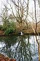 Woodland Pond - geograph.org.uk - 1760954.jpg