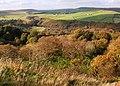 Woodland above Bretton Clough - geograph.org.uk - 591686.jpg