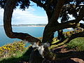 Woolacombe through gorse (7080930305).jpg