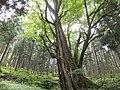 Yatsuomachi Odamou, Toyama, Toyama Prefecture 939-2455, Japan - panoramio.jpg