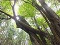Yatsuomachi Odamou, Toyama, Toyama Prefecture 939-2455, Japan - panoramio (3).jpg