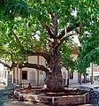 Yazir Mosque Plane Tree Acipayam Denizli Turkey.jpg