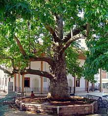 Yazir Mosque Plane Tree Acipayam Denizli Turkey.jpg