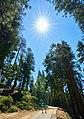 Yosemite (29454190148).jpg