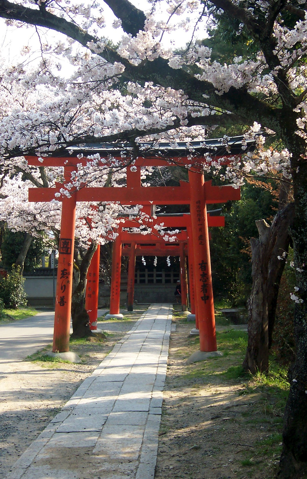 Cherry blossoms 01 - 2 part 7