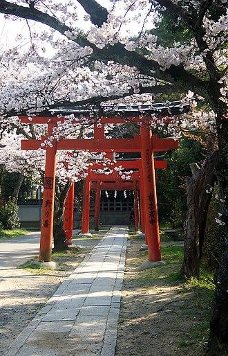 Yoshida Shrine - Yoshida torii at cherry blossom time.