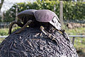 ZSL London - Dung Beetles sculpture (03).jpg