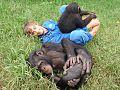 Zambia monkey.jpg