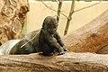 Zoo ZH DSC 6752 (2917292795).jpg