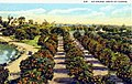 """An Orange Grove in Florida"" (10724609885).jpg"