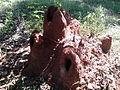 """Termite hills of Salem"".jpg"