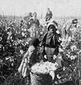 """We'se done all dis's Mornin'."" (Girls with bale of cotton in the field.), by Keystone View Company cleaned.jpg"