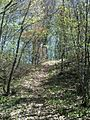 Šuma, Radoševo.jpg