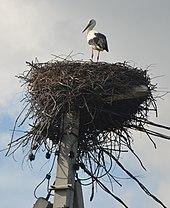 Гнездо на столбе