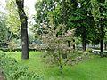 Весна в Кольцовском сквере - panoramio.jpg