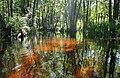 В лабіринтах Стоходу - panoramio (1).jpg