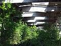 Деревья под крышей недостроенного цеха. (Trees under the roof of an unfinished shop) - panoramio.jpg