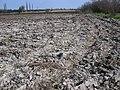 Засолені ґрунти.jpg