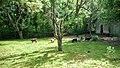 Зоопарк-Ловеч - panoramio (5).jpg