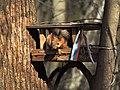 Измайловский парк. - panoramio.jpg