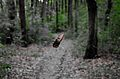 Миљаковачка шума4.JPG