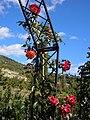 М. Ялта, сел. Нікіта. Нікітський ботанічний сад 01.jpg