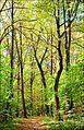 Осень в Битце - panoramio.jpg