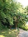 Парк аграрно-економічного коледжу Полтавської державної аграрної академії.jpg