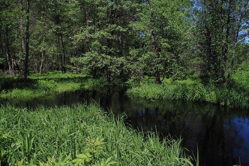 File:Река Липша (приток Большой Кокшаги) 04.jpg