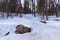 """Сергиевка. ВАлун """"Голова"""" под снегом..jpg"""