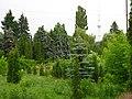 Сырецкий дендропарк на фоне телевизионной башни.jpg