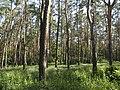 Украина, Киев - Голосеевский лес 02.jpg