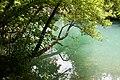Чорнорічинський каньйон, рослинність.jpg