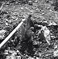 """הרי יהודה - נטע צעיר ביער הקק""""ל.-JNF032435.jpeg"""