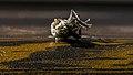 عکس از زوایای مگس مرده 06.jpg