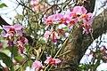 মধুপুর জাতীয় উদ্যানের অর্কিড ২.jpg