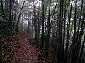 公盂山路 - Footpath to Gongyu Village - 2014.05 - panoramio.jpg